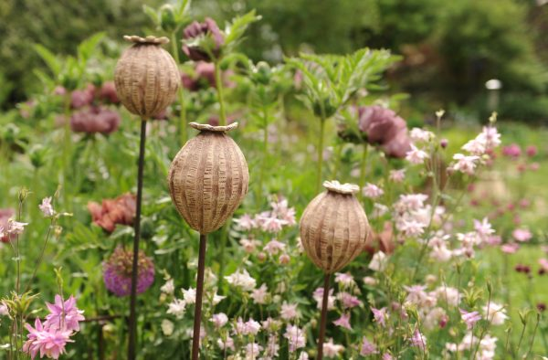 Extra Large Seed heads