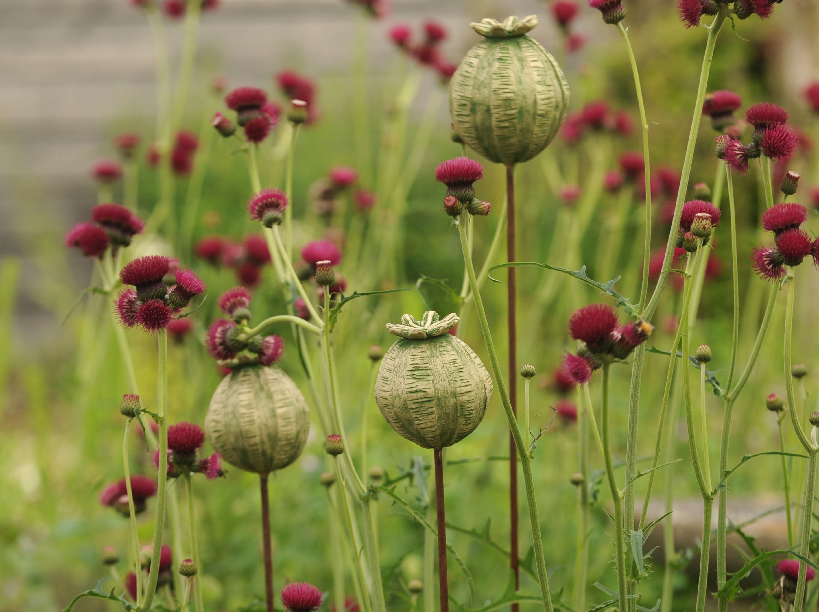 Large seed heads